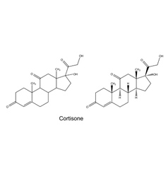 Structural chemical formulas of cortisone vector image vector image