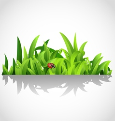 Green lush grass with dew and ladybird vector