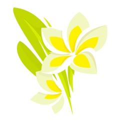 plumeria flower vector image