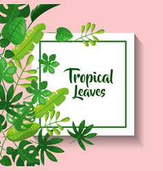 Tropical leaves greeting card natural foliage vector