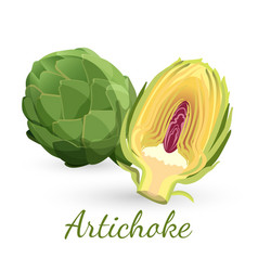 Fresh green artichoke with stem and half bud vector