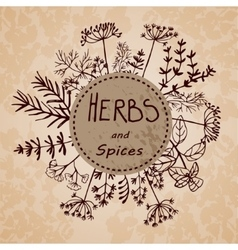 Background hand drawn herbs and spices vector