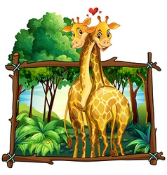 Two giraffes hugging in the jungle vector