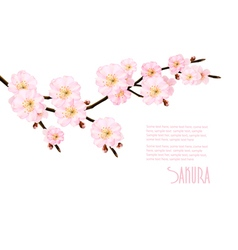 Spring nature background with blossoming sakura vector