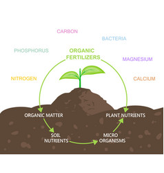 diagram of nutrients in organic fertilizers vector image vector image