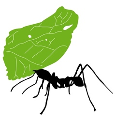Leaf cutter ant vector image vector image