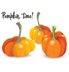 three different orange pumpkin isolated on white vector image vector image
