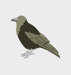 In flat style of raven vector