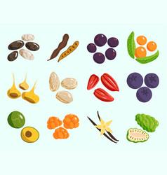 vegetarian food healthy vegetable and fruits vector image