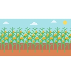 Background of corn field vector