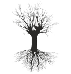 Old deciduous tree with the roots vector