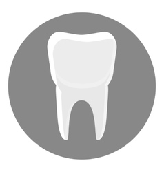 White tooth icon gray monochrome style vector image vector image