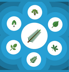 Flat icon nature set of acacia leaf foliage vector