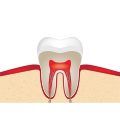 Crop of tooth vector image