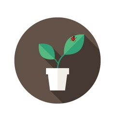 Pot with leaves and lady bug flat icon vector