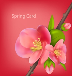 Spring greeting card with branch of japanese vector