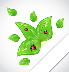 Leaves with ladybugs sticking out of the cut paper vector image vector image