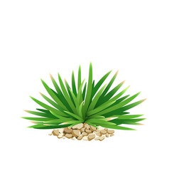 mini mondo grass with small stone vector image vector image
