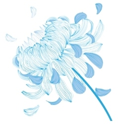 Blue chrysanthemum flower vector