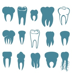 Human teeth set vector image