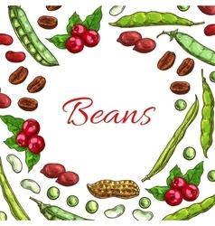 Beans nuts and seeds poster vector image vector image
