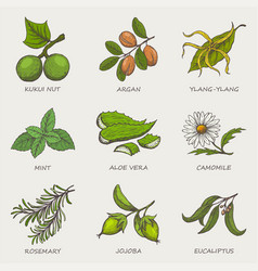 set of herbs and plants hand drawn icons that are vector image