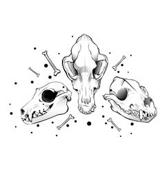 Dog skull engraving style vector