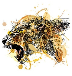 Colored hand sketch roaring lioness head vector