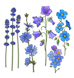 hand drawn blue flowers - lavender forget me not vector image