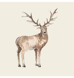 hand drawn deer watercolor style vector image