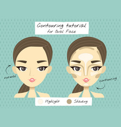 a tutorial of contouring for oval vector image vector image