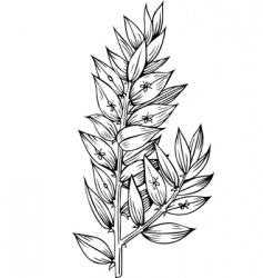 plant phyllon klados vector image vector image