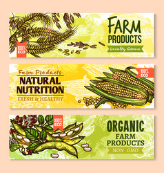 banners of farm grown grain and cereals vector image