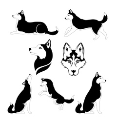Graphic silhouette of a dog of breed siberian vector