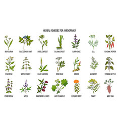 best herbal remedies to treat amenorrhea vector image vector image