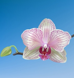 Pink white orchid vector