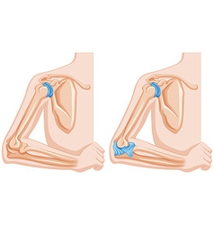 Diagram showing elbow joints vector