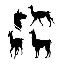 Silhouettes of a lama vector