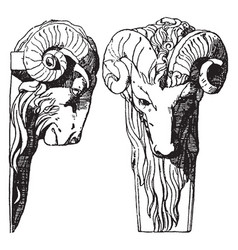 Ram head is a dates back to the late renaissance vector