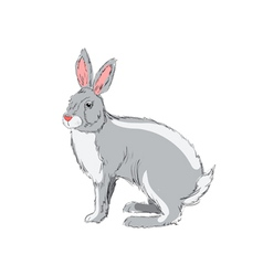 Hand drawn rabbit vector