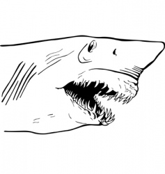 Shark jaw vector