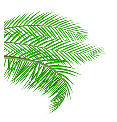tropical green leaves jungle leaves vector image