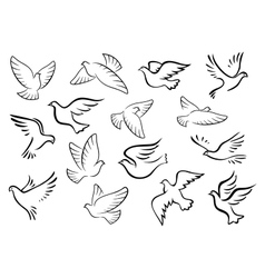 Pigeon and dove birds silhouettes vector image