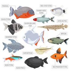 freshwater aquarium fishes breeds icon set flat vector image vector image