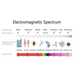Electromagnetic spectrum diagram vector