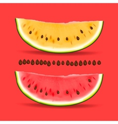 Slice of nice fresh yellow and red watermelon vector