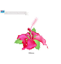 Popular flower of federated states of micronesia vector
