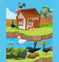 Farm scene with ducks and chickens vector