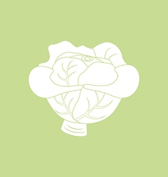 Cabbage vegetable icon vector