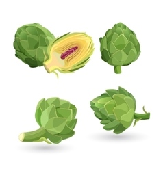 Artichoke green flower heads isolated vector